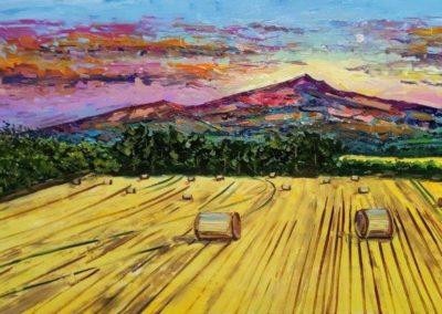 sugarloaf harvest